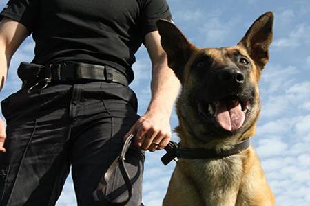 vogilancia-com-cão-de-guarda-450X300